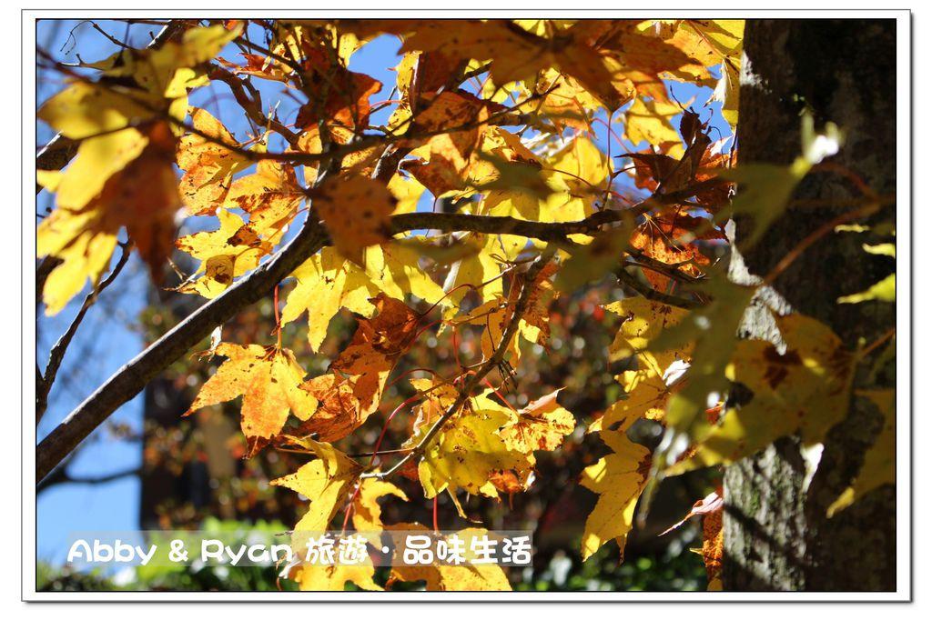 newIMG_9353.jpg