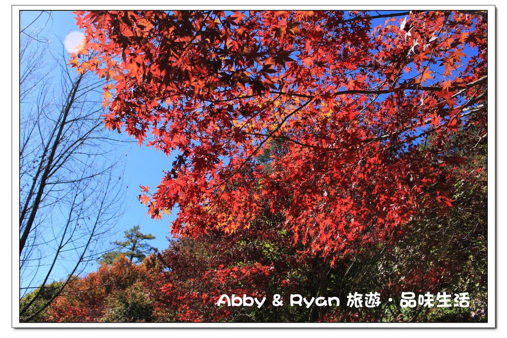 newIMG_9382.jpg
