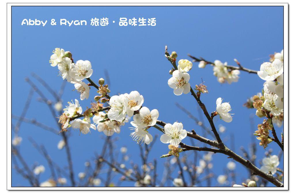 newIMG_6058.jpg