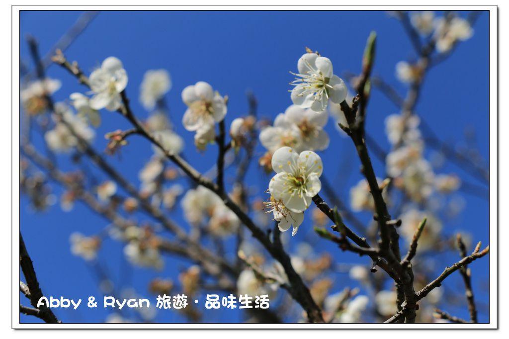 newIMG_4143.jpg