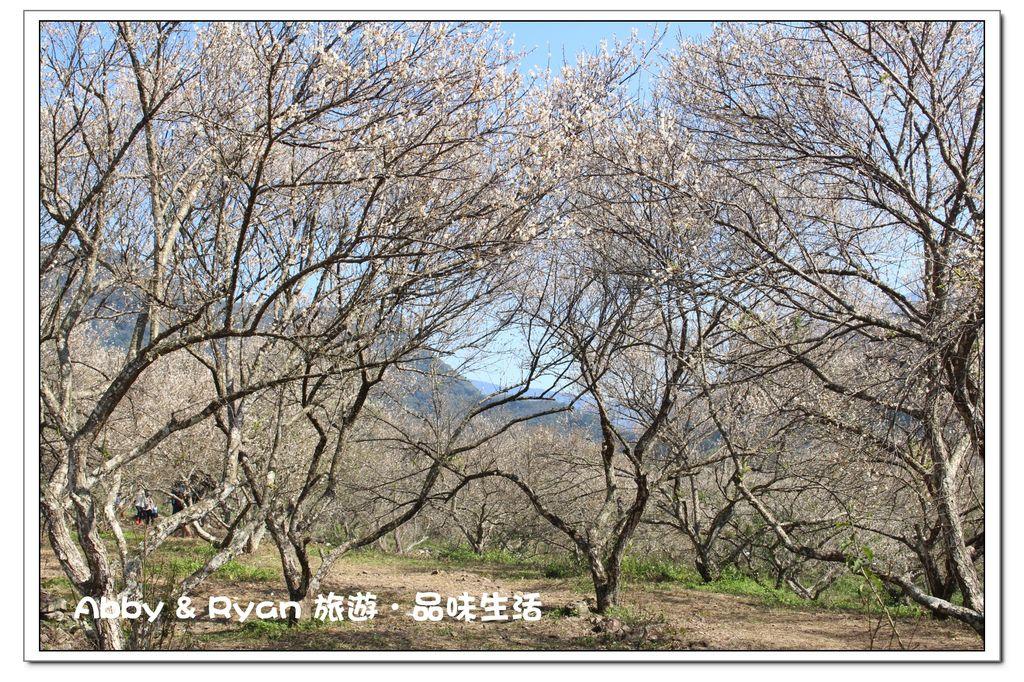 newIMG_6053.jpg