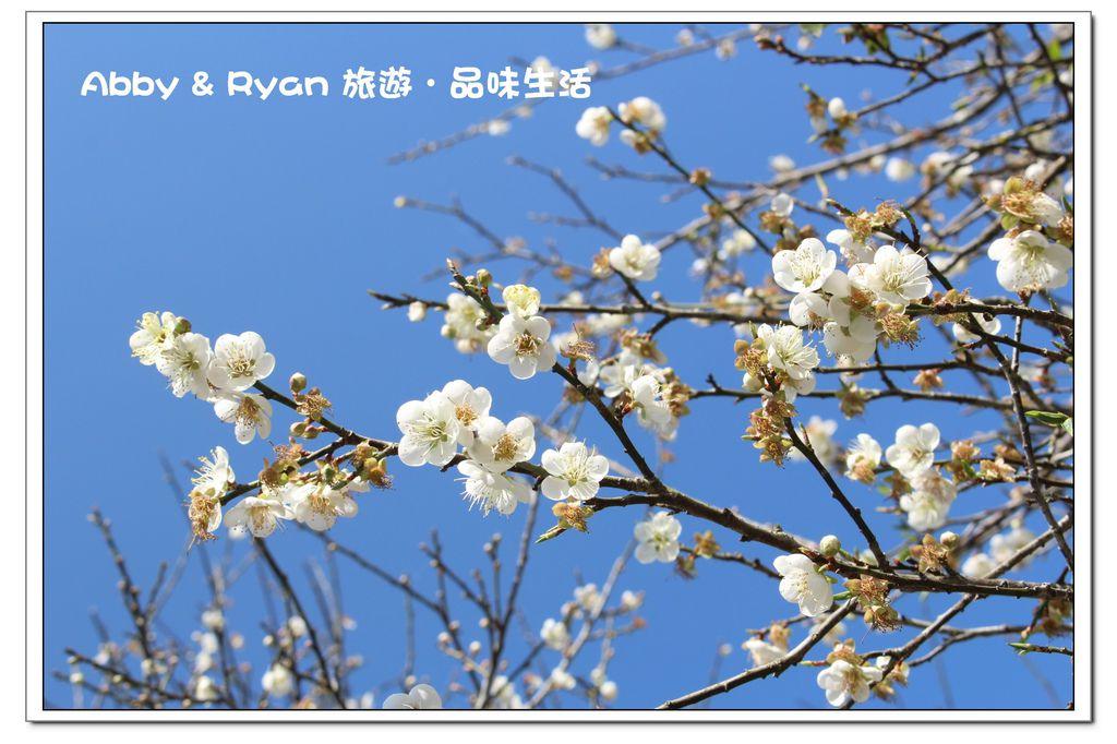 newIMG_6060.jpg