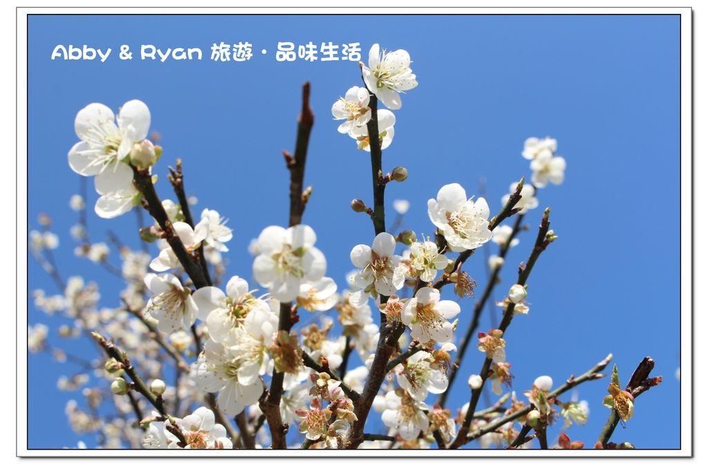 newIMG_6065.jpg