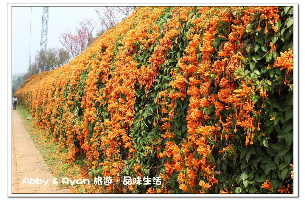 newIMG_9572.jpg