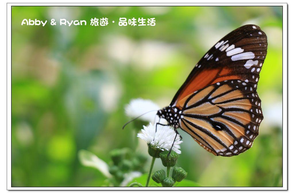 newIMG_9772.jpg