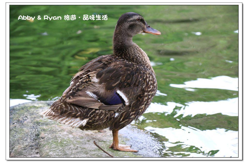newIMG_0015.jpg