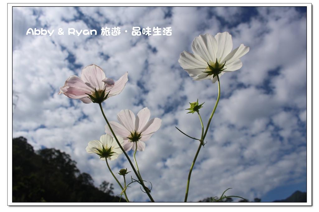 newIMG_0590.jpg