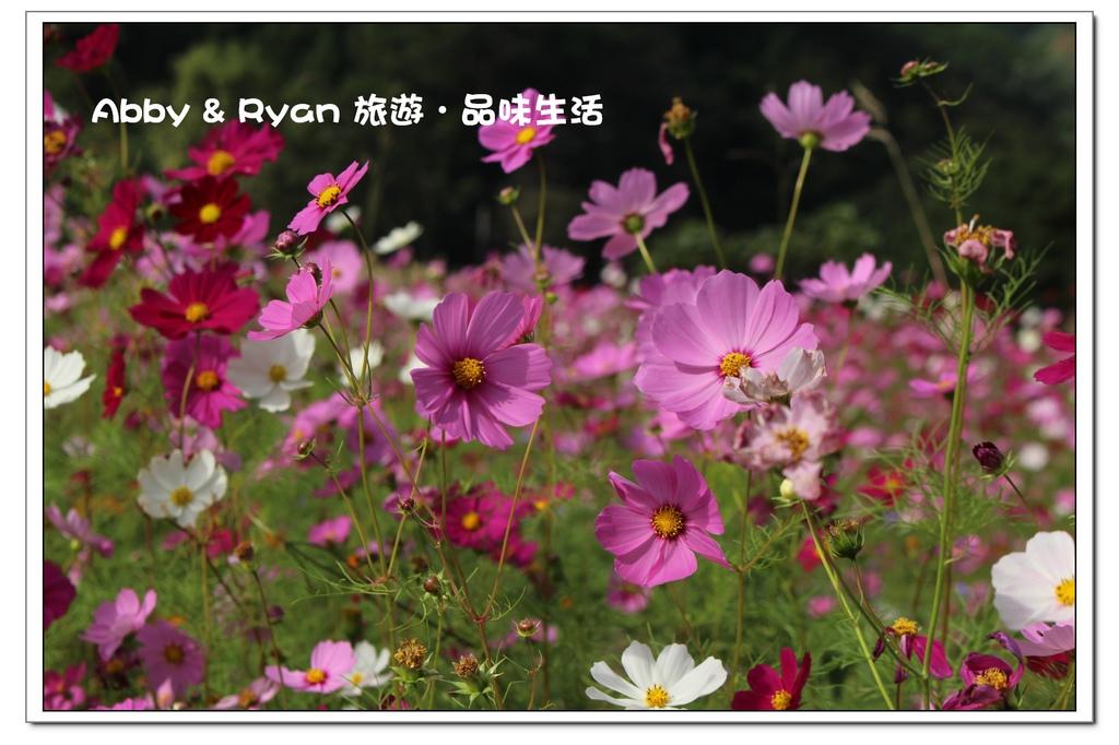 newIMG_0592.jpg