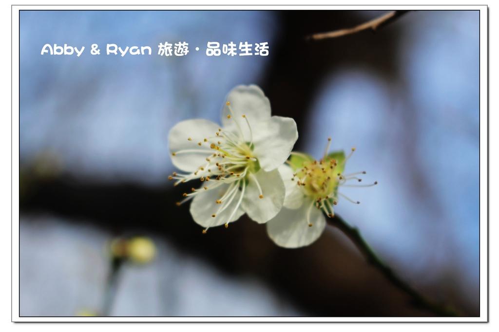 newIMG_4687.jpg