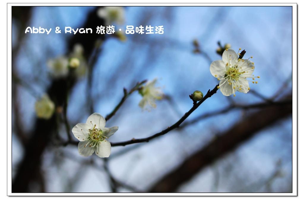newIMG_4695.jpg
