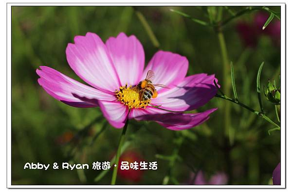 newIMG_9303.jpg