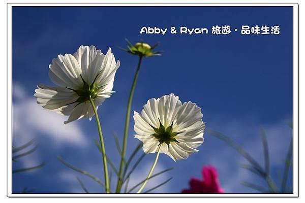 newIMG_9308.jpg