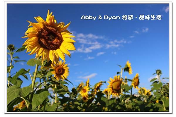 newIMG_9391.jpg