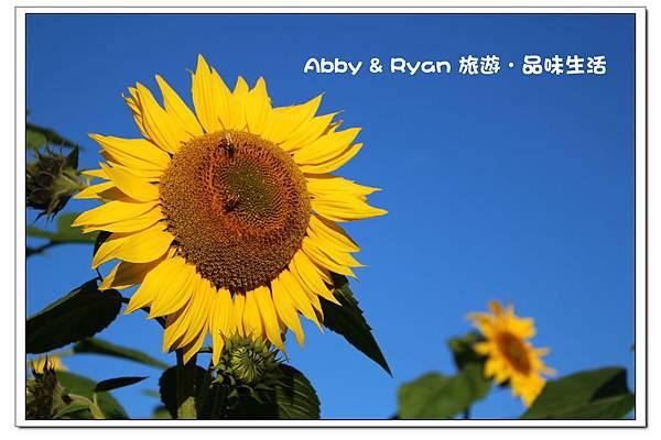 newIMG_9441.jpg