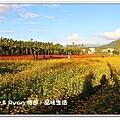 newIMG_9453.jpg