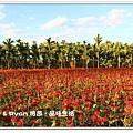 newIMG_9460.jpg
