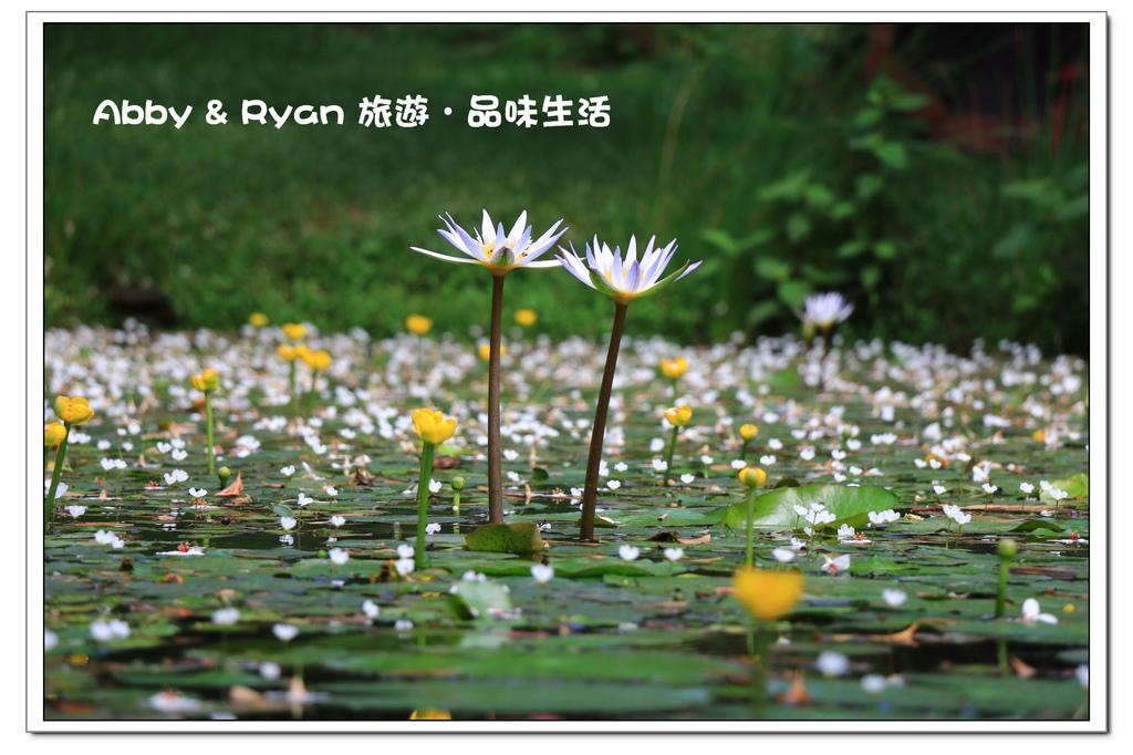 newIMG_6854.jpg