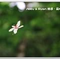 newIMG_6886.jpg