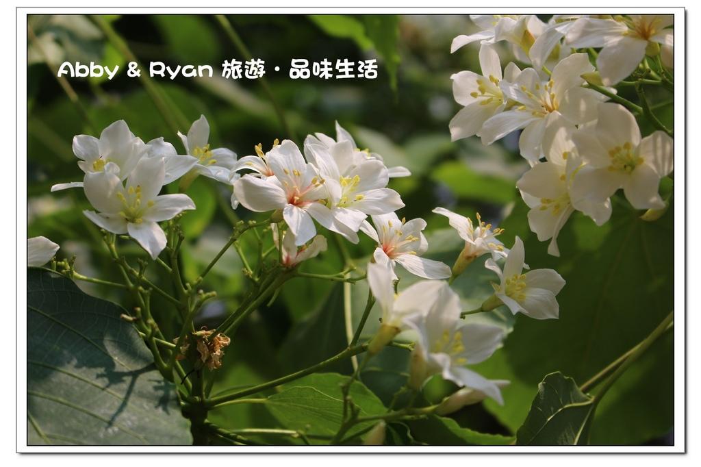 newIMG_2668.jpg