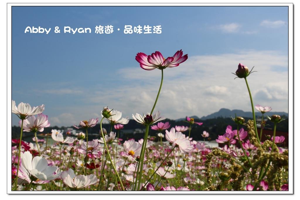 newIMG_7803.jpg