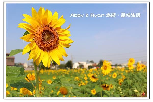 newIMG_8656.jpg
