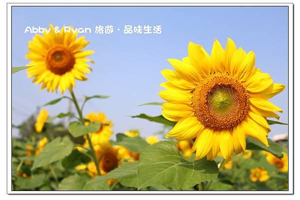 newIMG_8671.jpg
