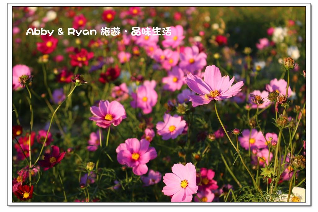 newIMG_0062.jpg