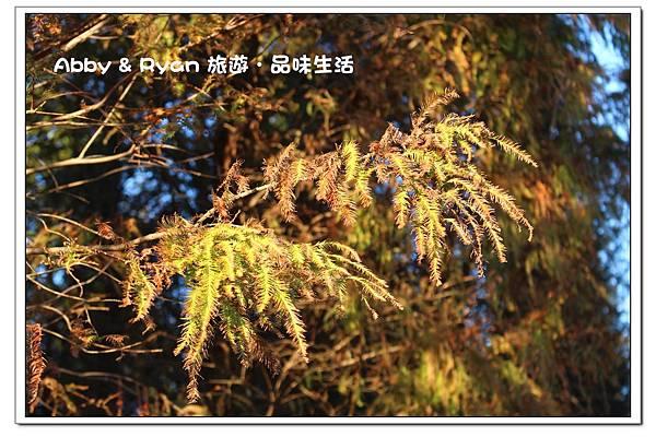 newIMG_0029.jpg