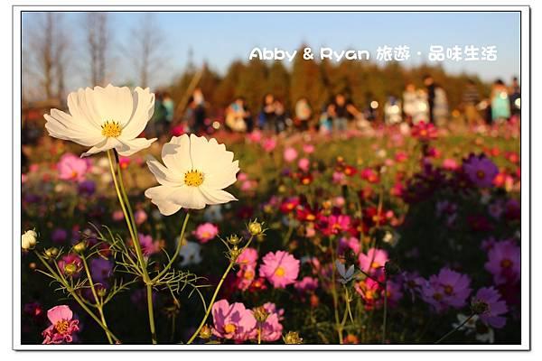 newIMG_0050.jpg
