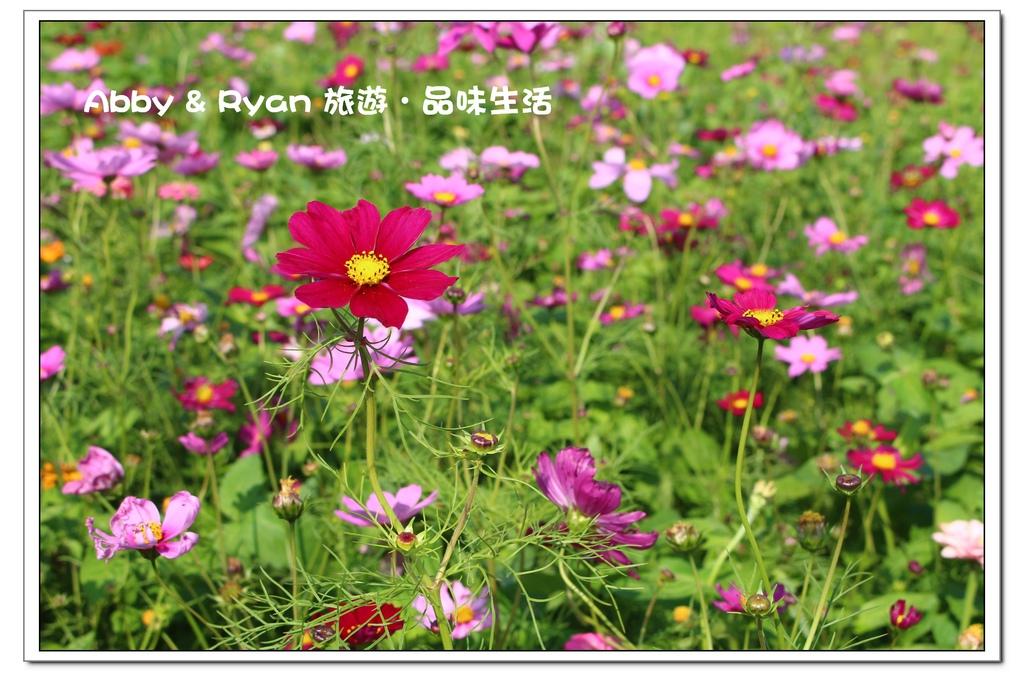 newIMG_1552.jpg