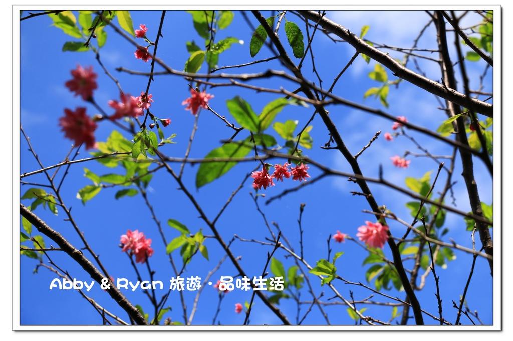 newIMG_8607.jpg
