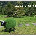 newIMG_7995.jpg