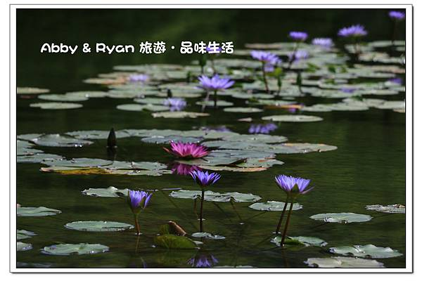 newIMG_8096.jpg