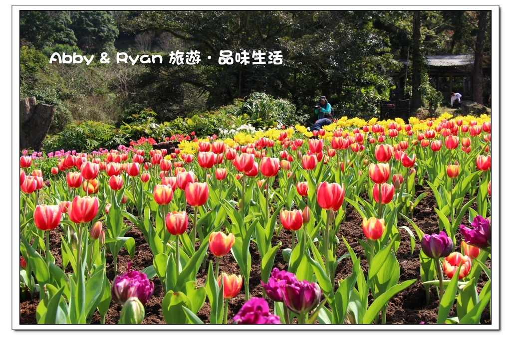 newIMG_0281.jpg