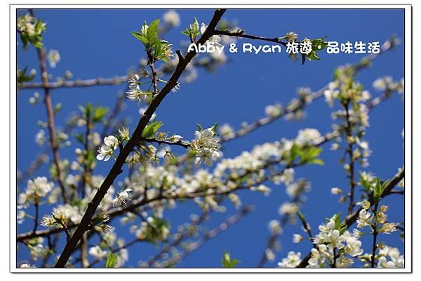 newIMG_0380.jpg