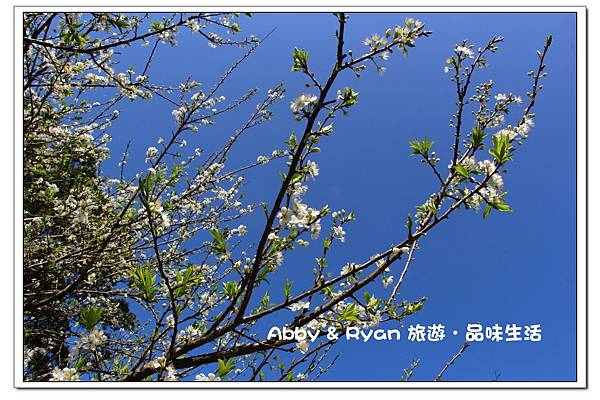 newIMG_0382.jpg