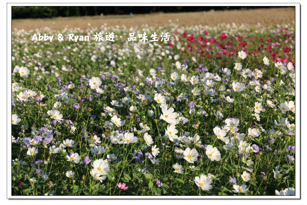 newIMG_0961.jpg
