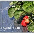 newIMG_1135.jpg