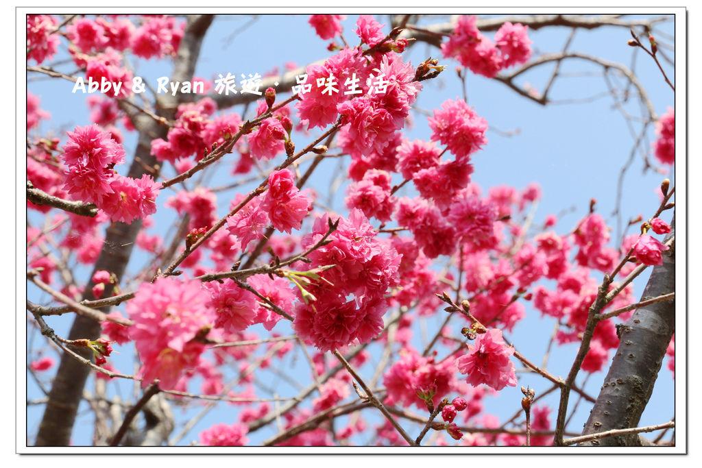 newIMG_0417.jpg
