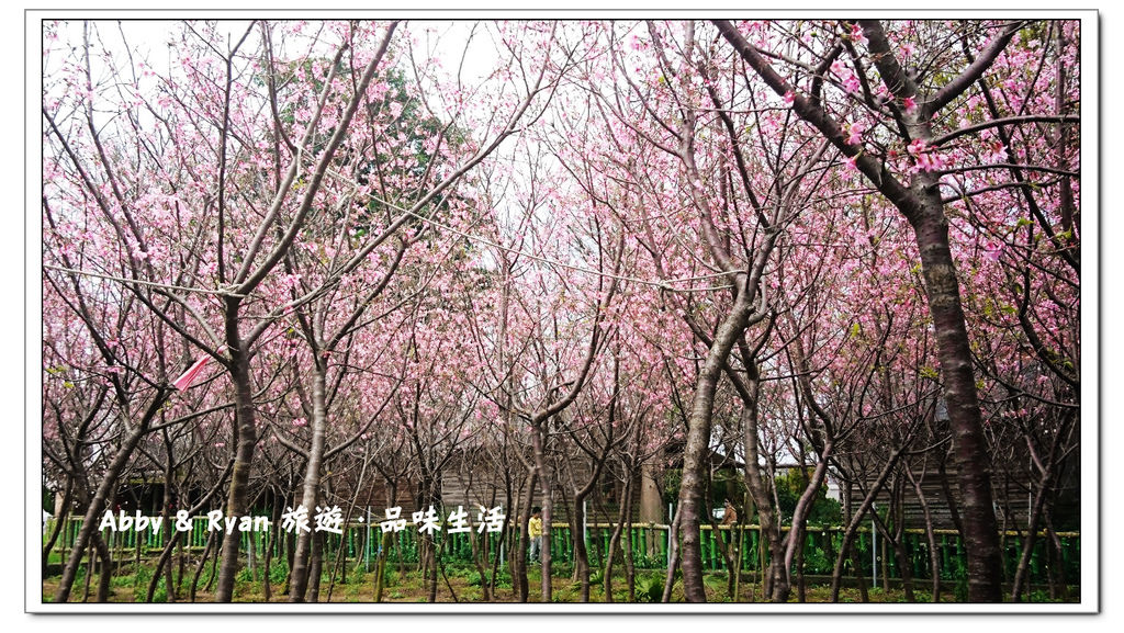 new櫻花林_190330_0010.jpg