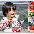 new草莓.jpg