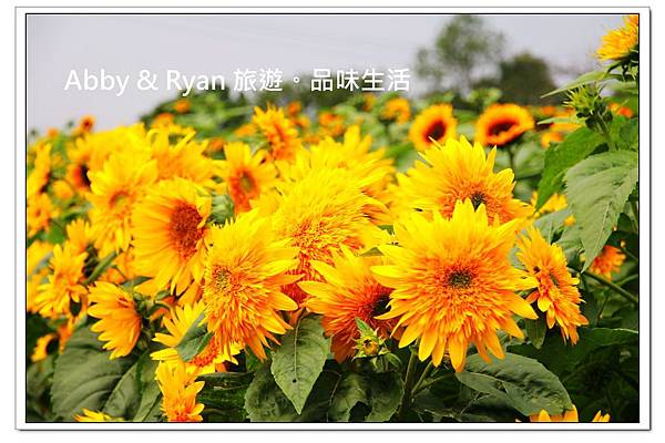newIMG_9384.jpg