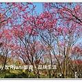 newIMG_4921.jpg