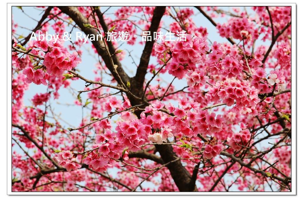 newIMG_4820.jpg