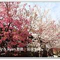 newIMG_6297.jpg