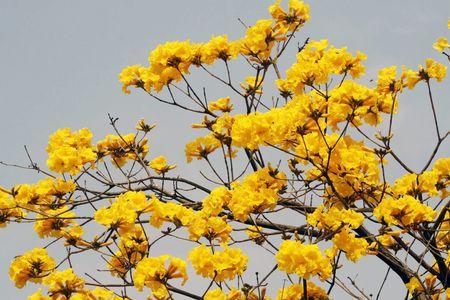 美麗的黃花.jpg