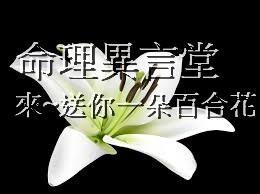 漂亮的百合花