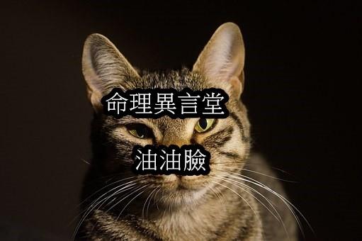 cat-1041324__340.jpg