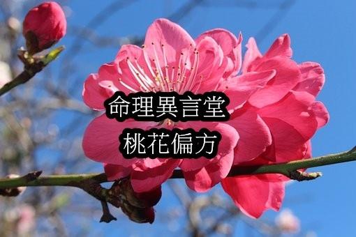 peach-blossoms-3662191__340.jpg