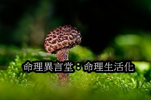 mushroom-3722395__340.jpg